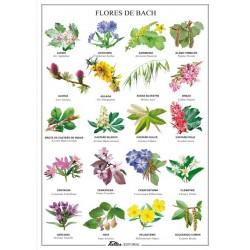 Lamina plastificada Flores de bach A4