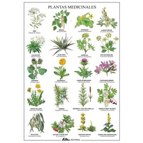 Lamina plastificada Plantas Medicinales A4