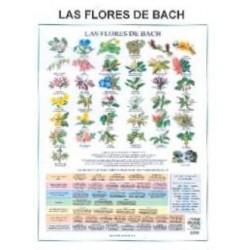 Lamina Flores de bach