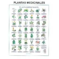 Lamina plantas medicinales