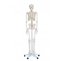 Esqueleto Tamaño Natural 1.80cm