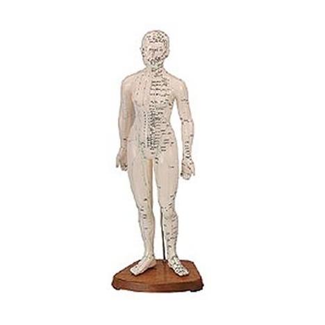 Cuerpo Humano Femenino ( Caucho 48cm.)