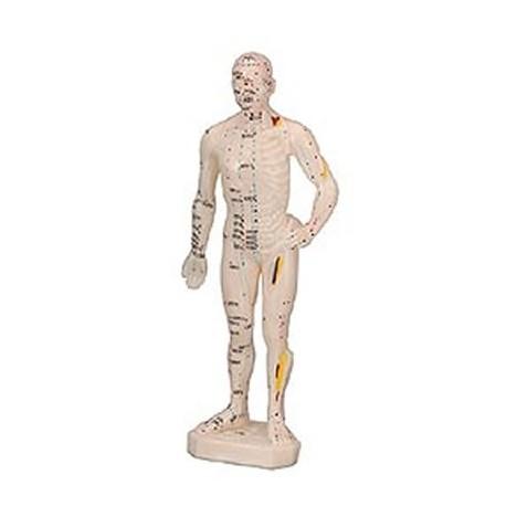 Cuerpo Humano Masculino ( Caucho 26 Cm.)