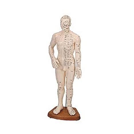 Cuerpo Humano Masculino ( Caucho 46 Cm.)