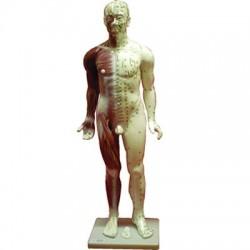 Cuerpo Humano Masculino. ( Fibra 84 Cm.)