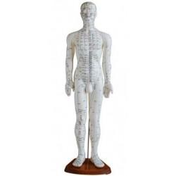Humano de acupuntura 50 cm