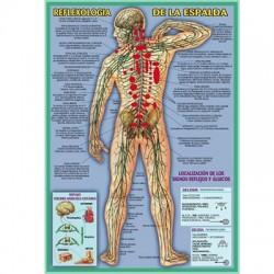 Reflexología de la Espalda (35x50cm.)
