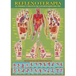 Lámina Reflexoterapia A4