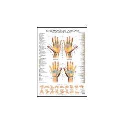 Lamina Reflexologia de las manos