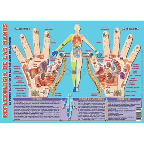 Lamina plastificada Reflexologia de las manos A4