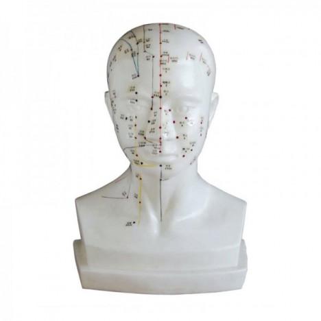 Modelo de cabeza 21 cm