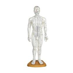 Modelo de cuerpo humano 46 cm