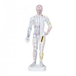 Modelo de cuerpo humano 26 cm
