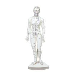 Modelo de cuerpo humano femenino 46 cm