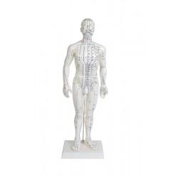 Modelo de cuerpo humano 50 cm