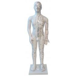 Modelo masculino 70cm