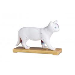 Modelo de gato para acupuntura