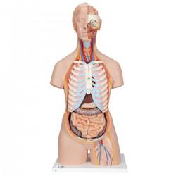 Torso clásico asexuado con espalda abierta, 21 partes - 3B Smart Anatomy