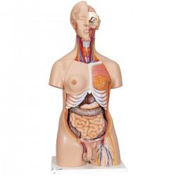 Torso de lujo de doble sexo, 24 partes - 3B Smart Anatomy