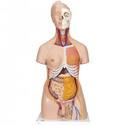 Torso de lujo de doble sexo, 20 partes - 3B Smart Anatomy
