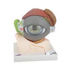 Ojo, con párpado y sistema lagrimal, 5 veces su tamaño natural, 8 piezas - 3B Smart Anatomy