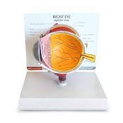 Modelo de ojo